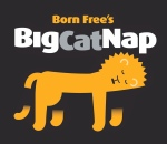 Big Cat Nap Logo Lion