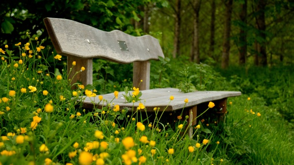nature-yellow-flowers-bench-3840x2160.jpg