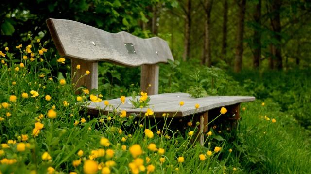 nature-yellow-flowers-bench-3840x2160.jpg