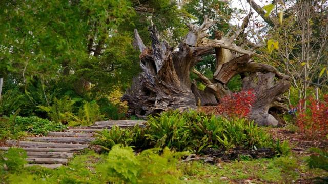 Morris-Arboretum-23391