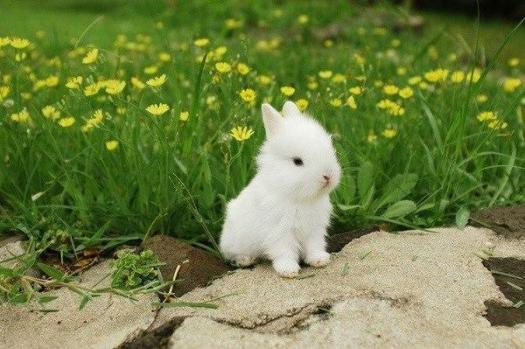 easter-decorating-inspiration-white-bunny