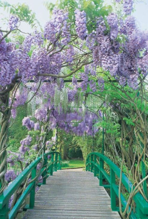 wisteria bridge.jpg